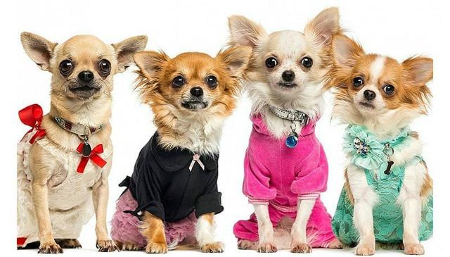 Выкройки для мини-собак своими руками