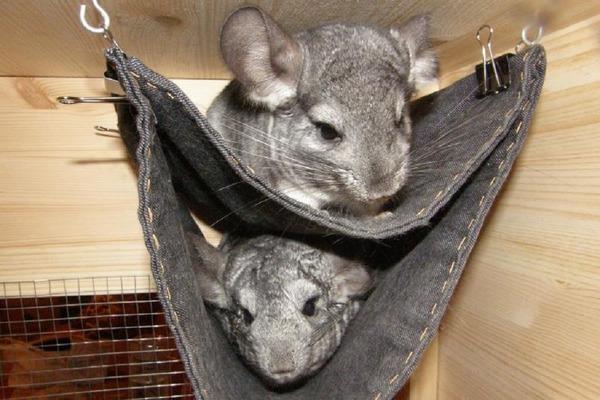 Как сделать гамак своими руками: для кошки, шиншиллы, крысы и для хорька
