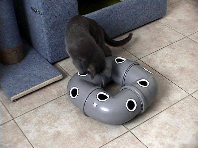 Игрушка для кота своими руками: варианты с шариком