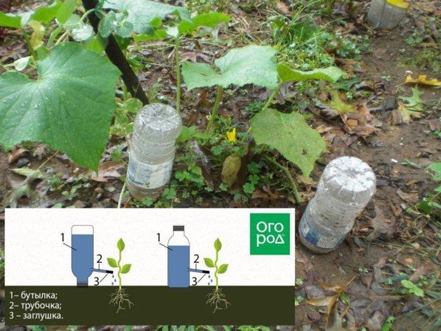 Идеи для дачи своими руками: варианты из ненужных вещей и из пластиковых бутылок