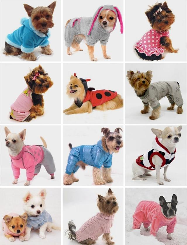 Одежда для собак своими руками: мастер класс с видео